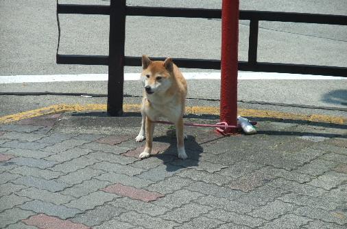 2010_0601momo120102.JPG