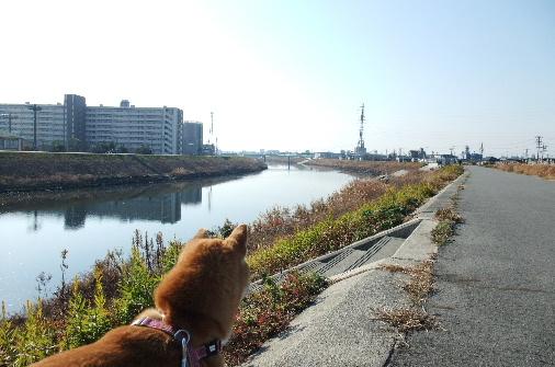 2011_0116momo170086.JPG