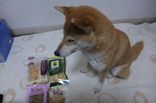 2011_0223momo170073.JPG
