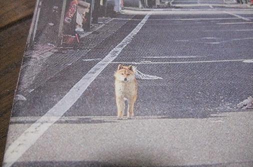 2011_0418momo170044.JPG