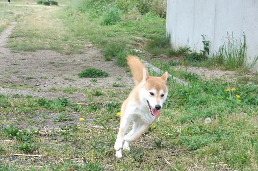 2011_0425momo170066.JPG
