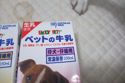 2011_0730momo210040.JPG