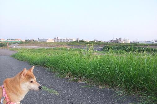 2011_0824momo210033.JPG