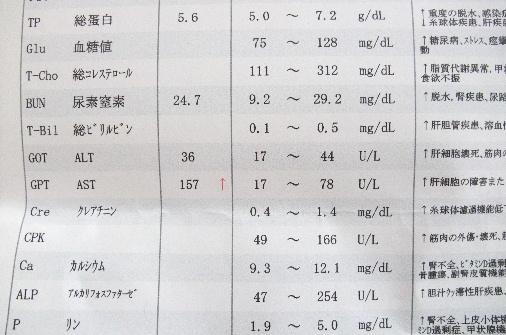 2012_0326momo0072.JPG