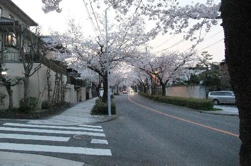 2012_0408momo0018.JPG