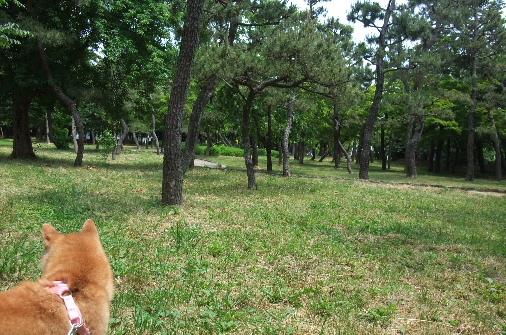 2012_0529momo0103.JPG