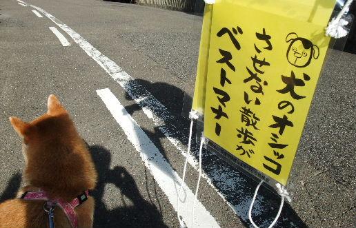 2012_11050096 - コピー.JPG