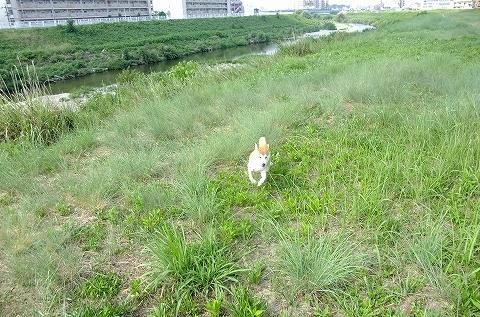 2013_09040146.jpg