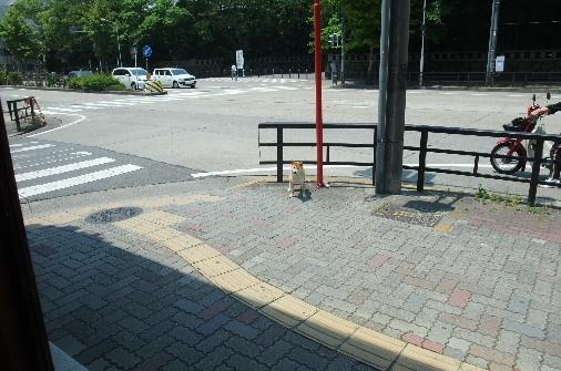 2010_0601momo120101.JPG