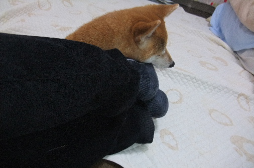 2011_0116momo170046.JPG