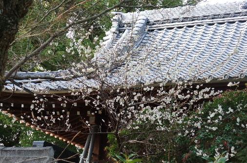 2011_0223momo170066.JPG