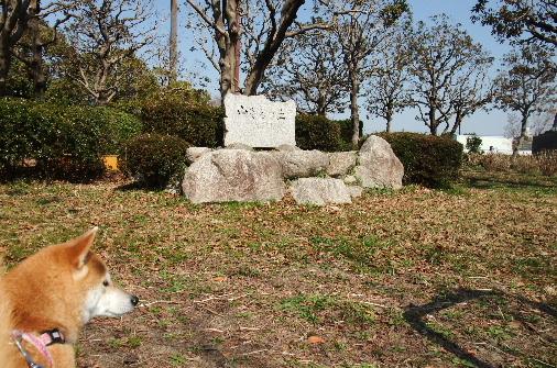 2011_0318momo170042.JPG
