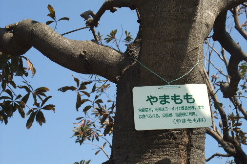 2011_0318momo170043.JPG