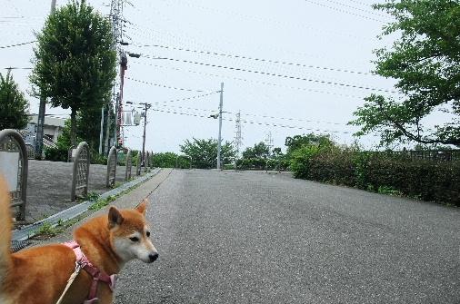 2012_06170129.JPG
